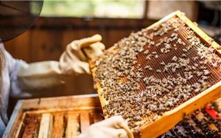 Abeille-apiculteur-enquete