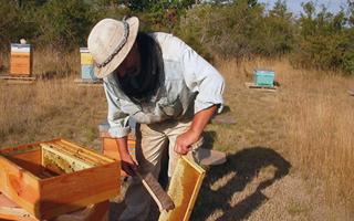 Abeilles-apiculteur-enquete