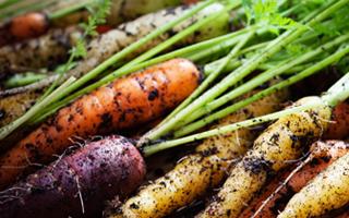 Bio-enquete-legumes