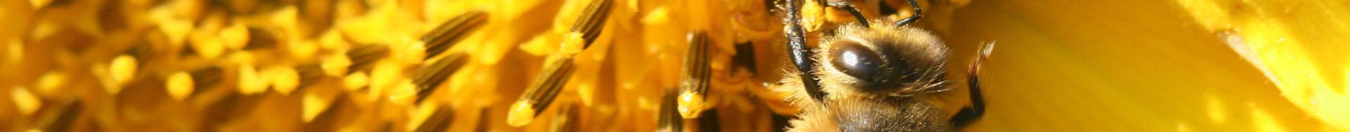Les-Abeilles-enquete-Terroir